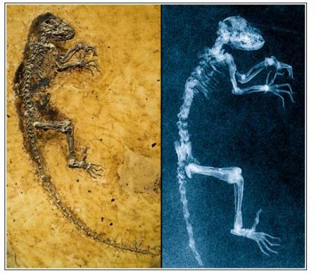 New Fossil Links Humans